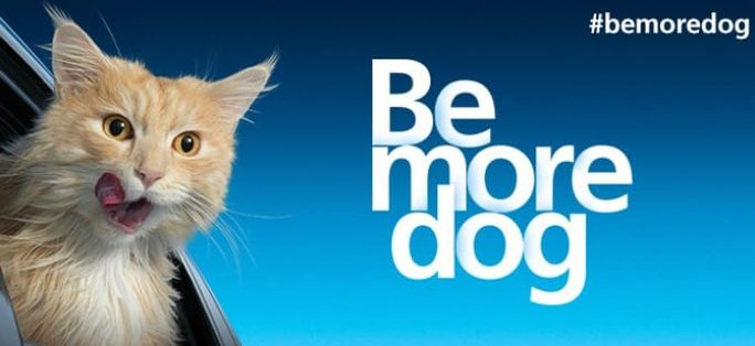 Be more dog by O2
